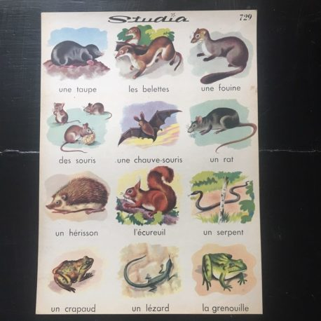 affiche animaux studia